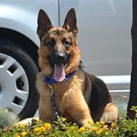 Adopt A Pet :: Benz - Irvine, CA