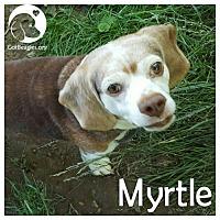 Adopt A Pet :: Myrtle - Chicago, IL