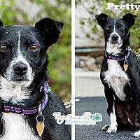Adopt A Pet :: Pretty Girl - Rexford, NY