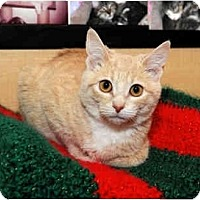 Adopt A Pet :: Goober - Farmingdale, NY