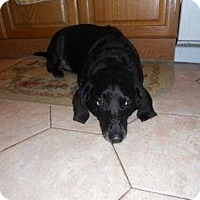 Adopt A Pet :: Blake, now Kevin - Killingworth, CT