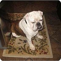 Adopt A Pet :: Bentley - Gilbert, AZ