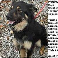 Adopt A Pet :: # 642-09 @ Animal Shelter - Zanesville, OH