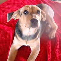 Adopt A Pet :: Holly - Columbia, KY