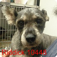 Adopt A Pet :: Riddick - Greencastle, NC