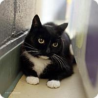 Adopt A Pet :: Jacks - Tucson, AZ