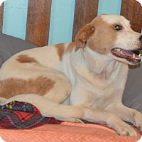 Adopt A Pet :: Loyd - Prole, IA