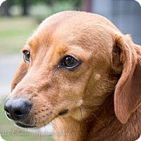Adopt A Pet :: Mr. Wiener - Daleville, AL