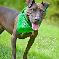 Adopt A Pet :: Jace - Springfield, MA