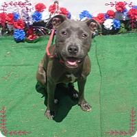 Adopt A Pet :: KELAH-see video - Marietta, GA