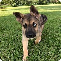 Adopt A Pet :: Pita-Adopted! - Detroit, MI
