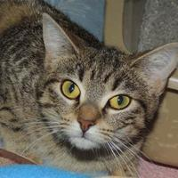 Adopt A Pet :: Pinky - Westville, IN