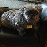 Adopt A Pet :: Ayshe 26 - DeSoto, IA