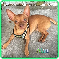Adopt A Pet :: Alan - Hollywood, FL