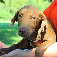 Adopt A Pet :: James - Southbury, CT
