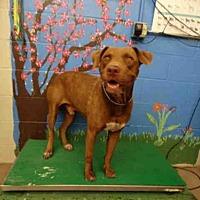 Adopt A Pet :: A078701 - Waco, TX