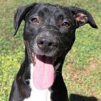 Adopt A Pet :: Janice - Potomac, MD