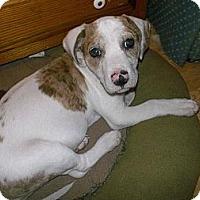 Adopt A Pet :: Pearl - Shirley, NY