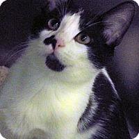 Adopt A Pet :: Spider - Secaucus, NJ