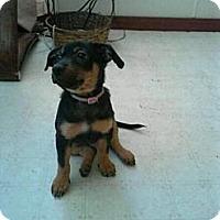 Adopt A Pet :: Bella - Houston, TX