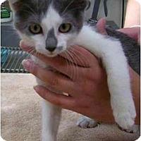 Adopt A Pet :: Dorrie - Odenton, MD