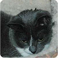 Adopt A Pet :: Tabitha - Warminster, PA