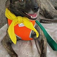 Adopt A Pet :: Holly - Louisville, KY