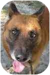 Shepherd (Unknown Type) Mix Dog for adoption in Eatontown, New Jersey - Mason