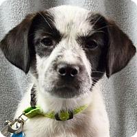 Adopt A Pet :: Winona - Minneapolis, MN