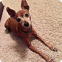 Adopt A Pet :: Duff - Syracuse, NY