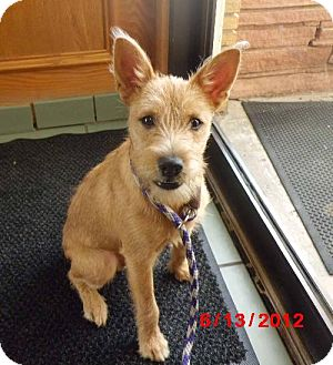 Terrier (Unknown Type, Medium) Mix Dog for adoption in Lavon, Texas - Alex