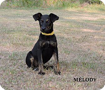 Coonhound (Unknown Type) Mix Puppy for adoption in Washington, Georgia - Melody