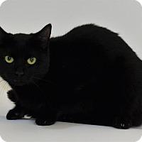 Adopt A Pet :: PRISCILLA - New Iberia, LA