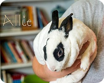 Mini Rex Mix for adoption in Somerset, Pennsylvania - Allie