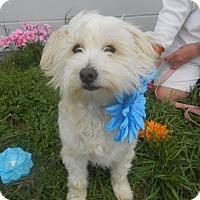 Adopt A Pet :: Aldean - Lockhart, TX
