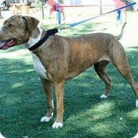 Adopt A Pet :: Lia - Bradenton, FL