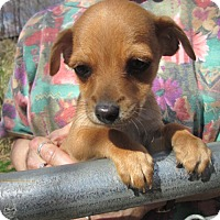 Adopt A Pet :: CORKY - Lincolndale, NY