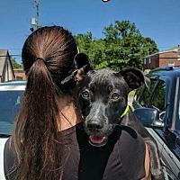 Adopt A Pet :: Oakley - Mobile, AL