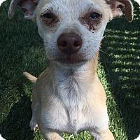 Adopt A Pet :: Loki - Chula Vista, CA