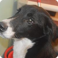 Adopt A Pet :: Rudie - Prole, IA