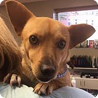 Adopt A Pet :: Carter - Mount Airy, NC