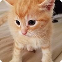 Adopt A Pet :: Herbie - West LA, CA