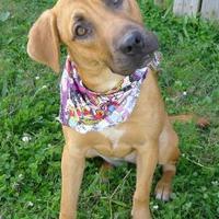 Adopt A Pet :: Garnet - Helena, AL