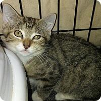 Adopt A Pet :: Chestnut - Bethpage, NY