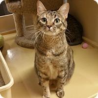 Adopt A Pet :: Louise - McKinney, TX