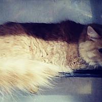 Adopt A Pet :: Pace - Trevose, PA