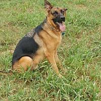 Adopt A Pet :: Apollo - Sealy, TX