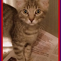 Adopt A Pet :: Silver - Berkeley Springs, WV