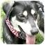 Photo 1 - Husky/Hound (Unknown Type) Mix Dog for adoption in Cincinnati, Ohio - Yuki
