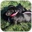 Photo 4 - Labrador Retriever Puppy for adoption in Prince William County, Virginia - james